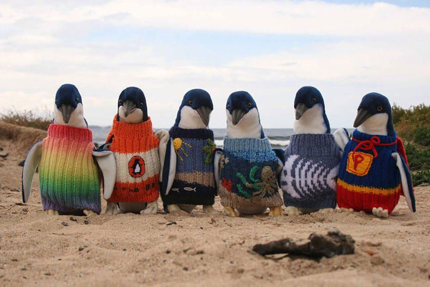 These penguins are ready for Winter!