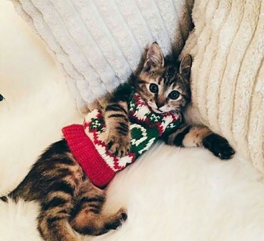 Cutest kitten in sweater!