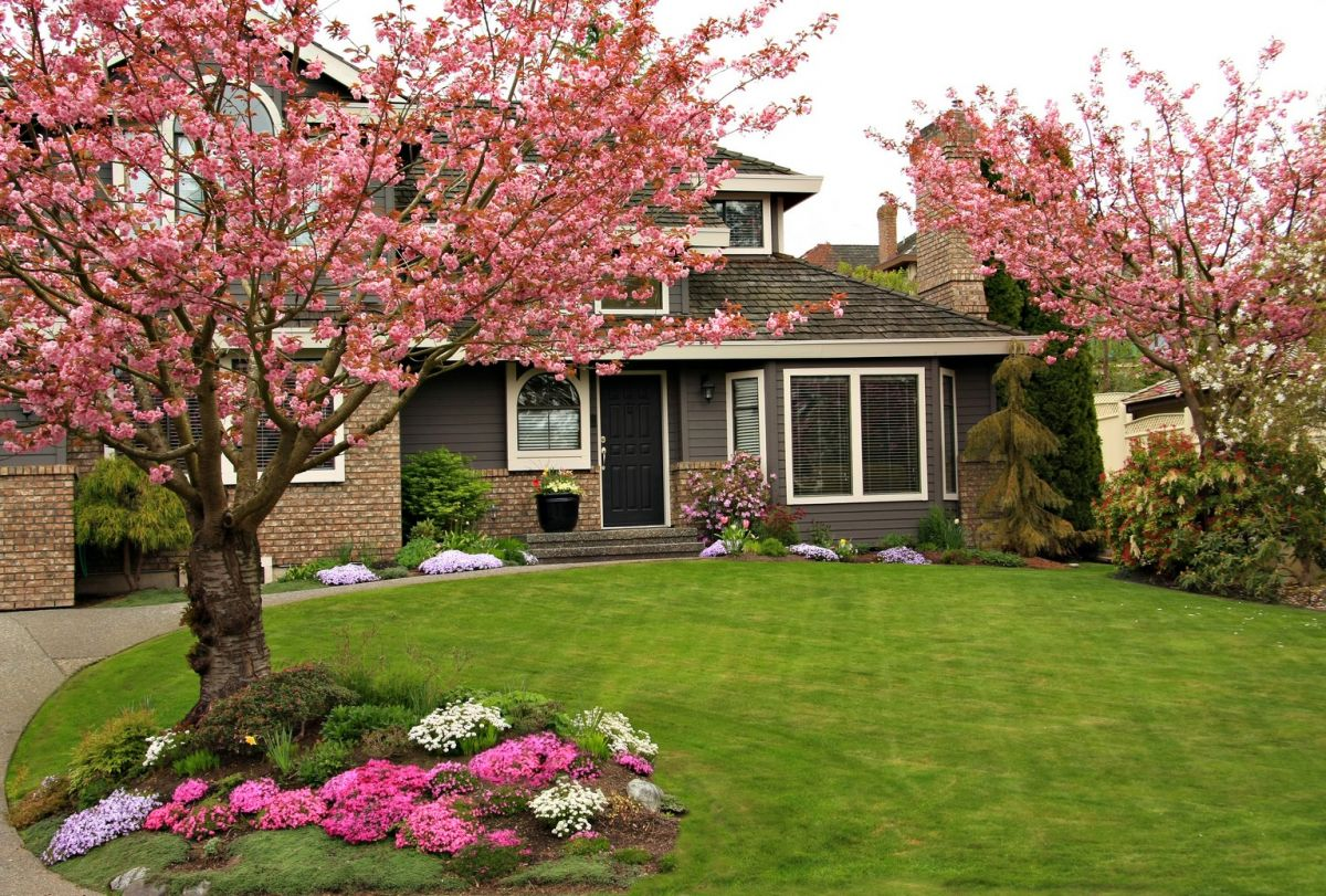 Front yard with dogwood trees in bloom