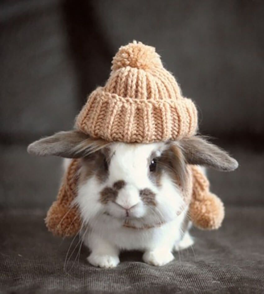 Bunny with knitted hat