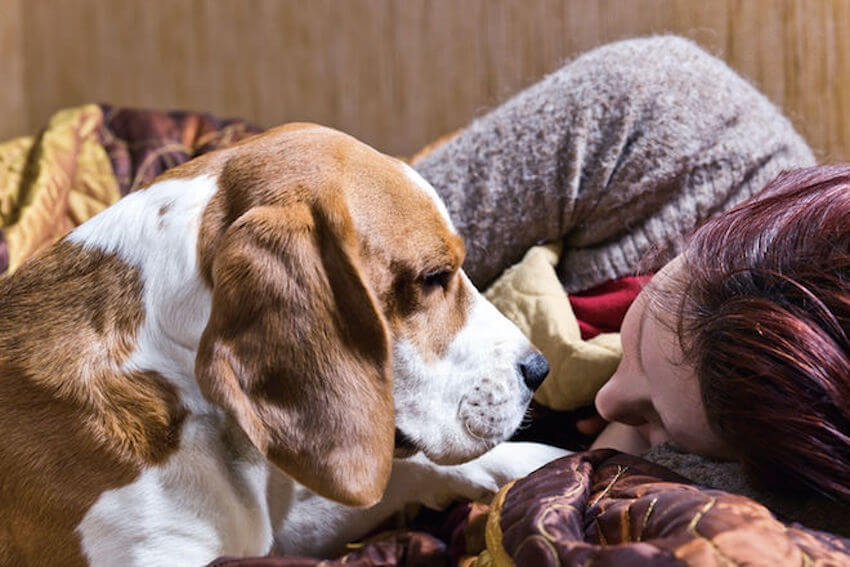 Face to face doggy love when you're upset in the home