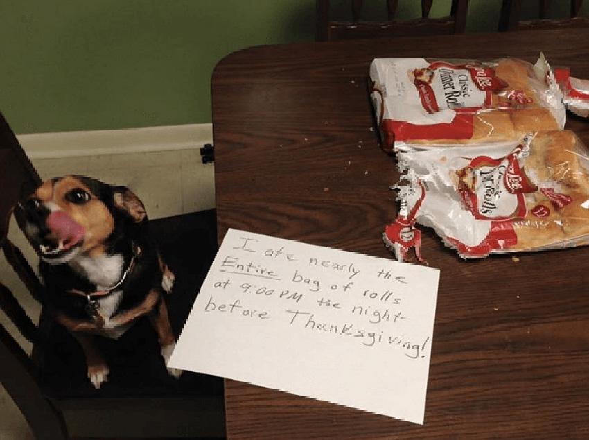 Helper Dog - 10 Most Hilarious Thanksgiving Food Fails