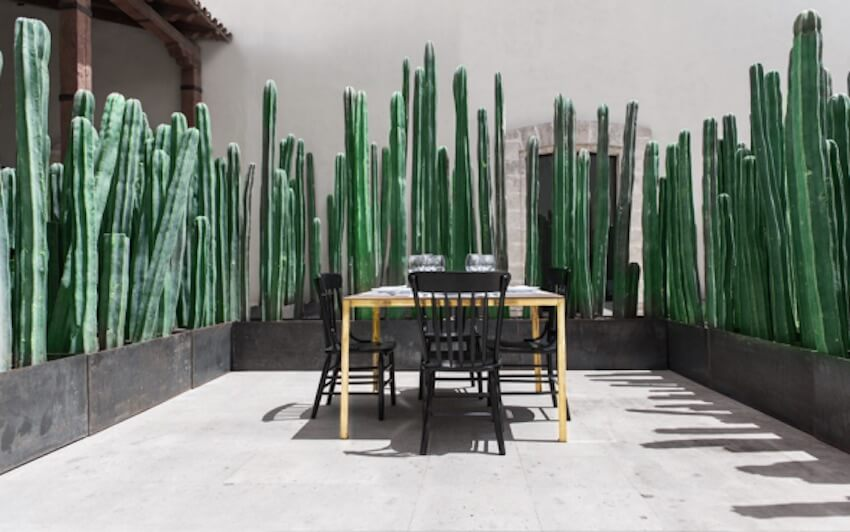 Use cactai as walls outdoor plant partition