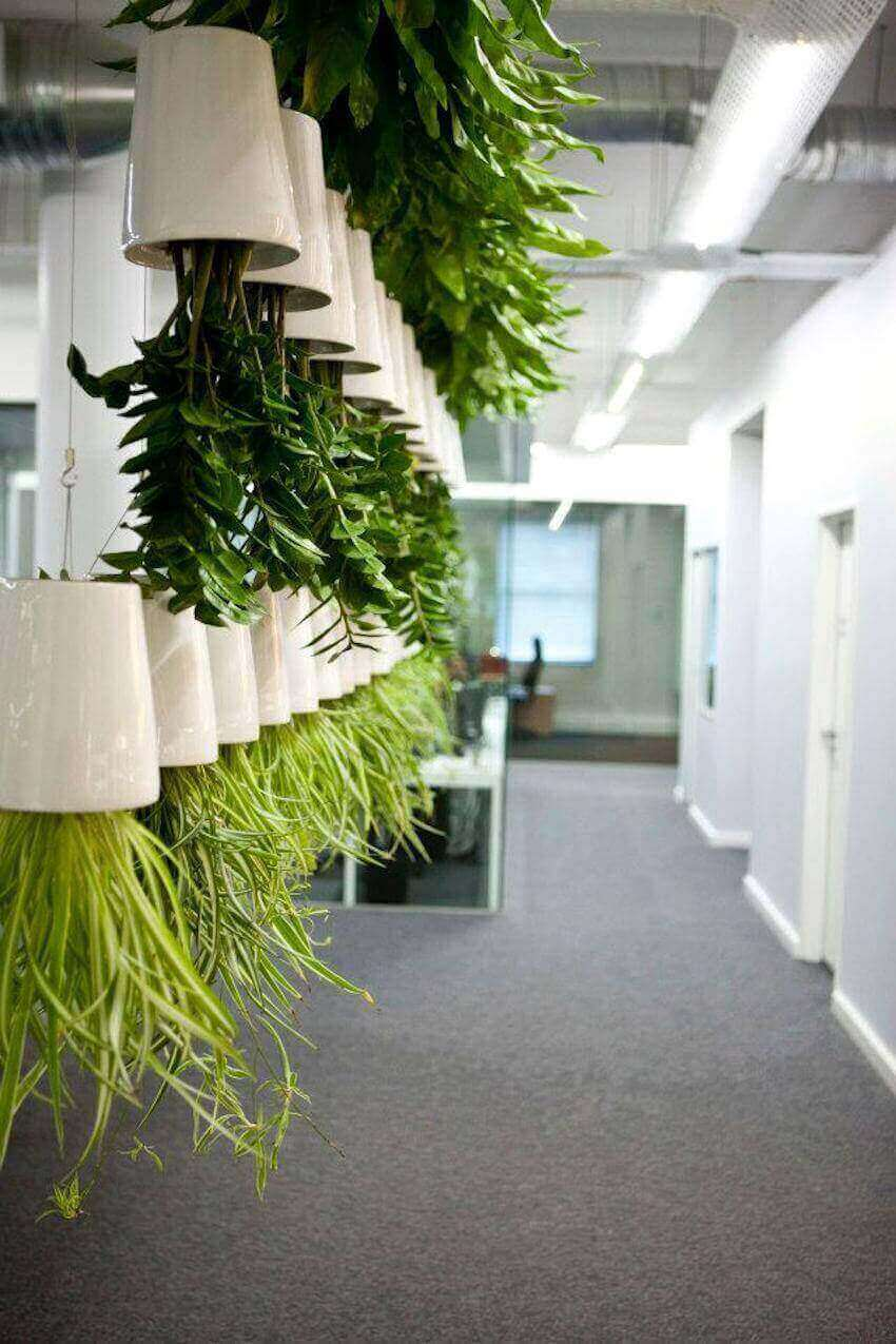 Upside down hanging plant screen