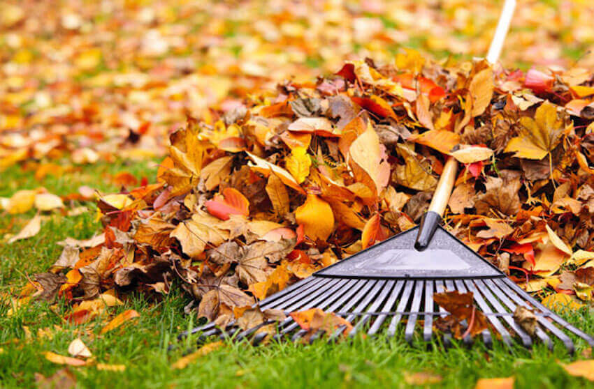 Some of the quickest and easiest raking tips on the internet