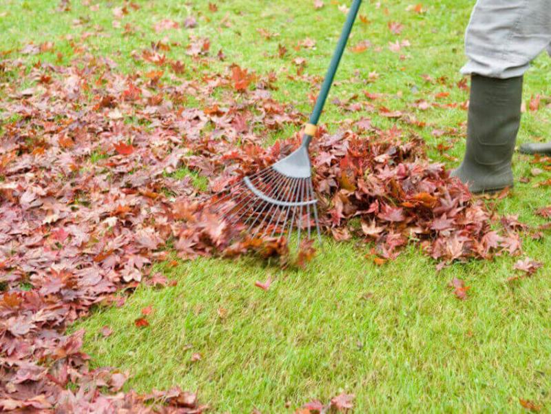 Raking with the correct technique in lawn care