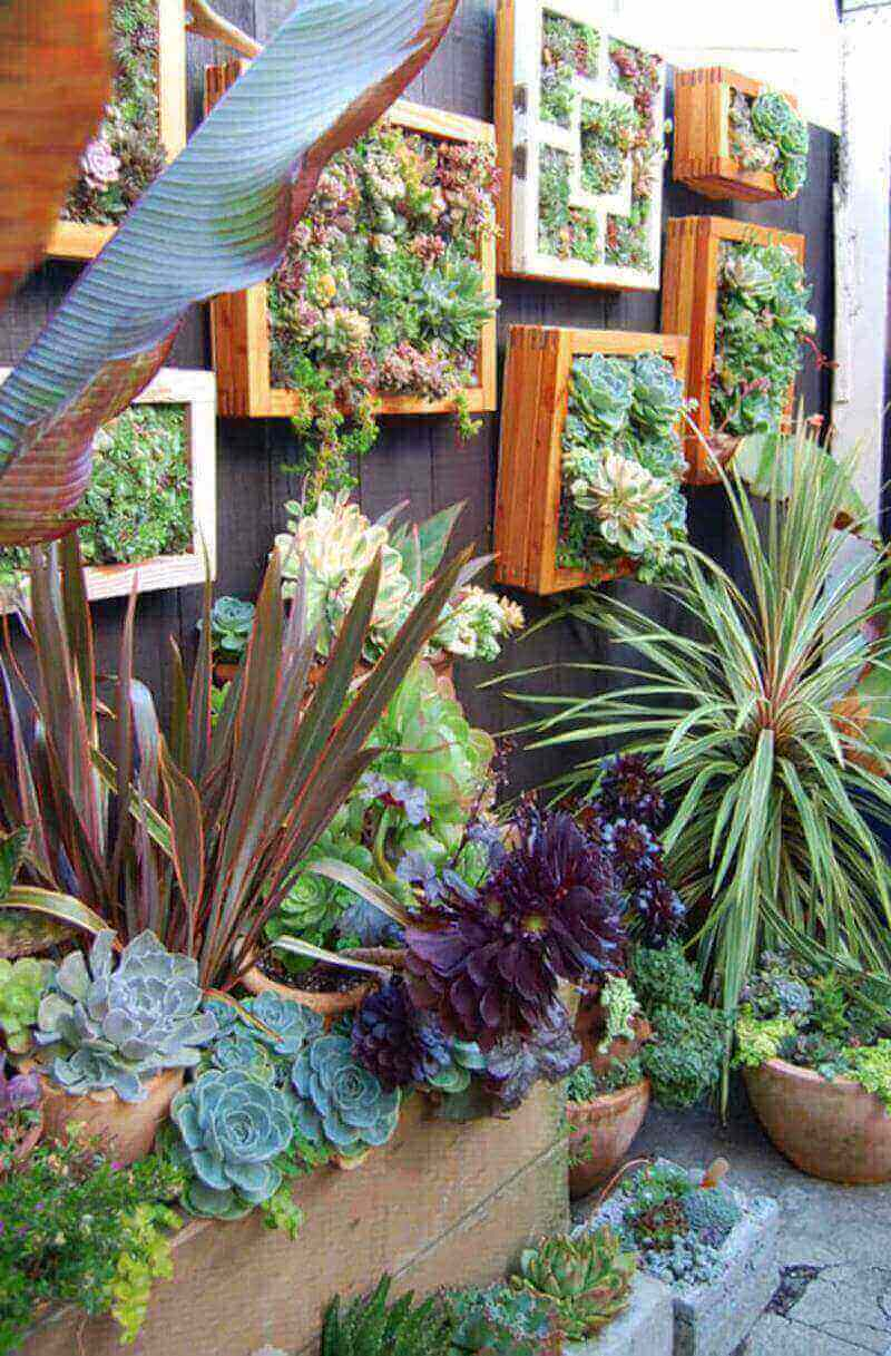 picture frames and succulents make great vertical gardening on your fence