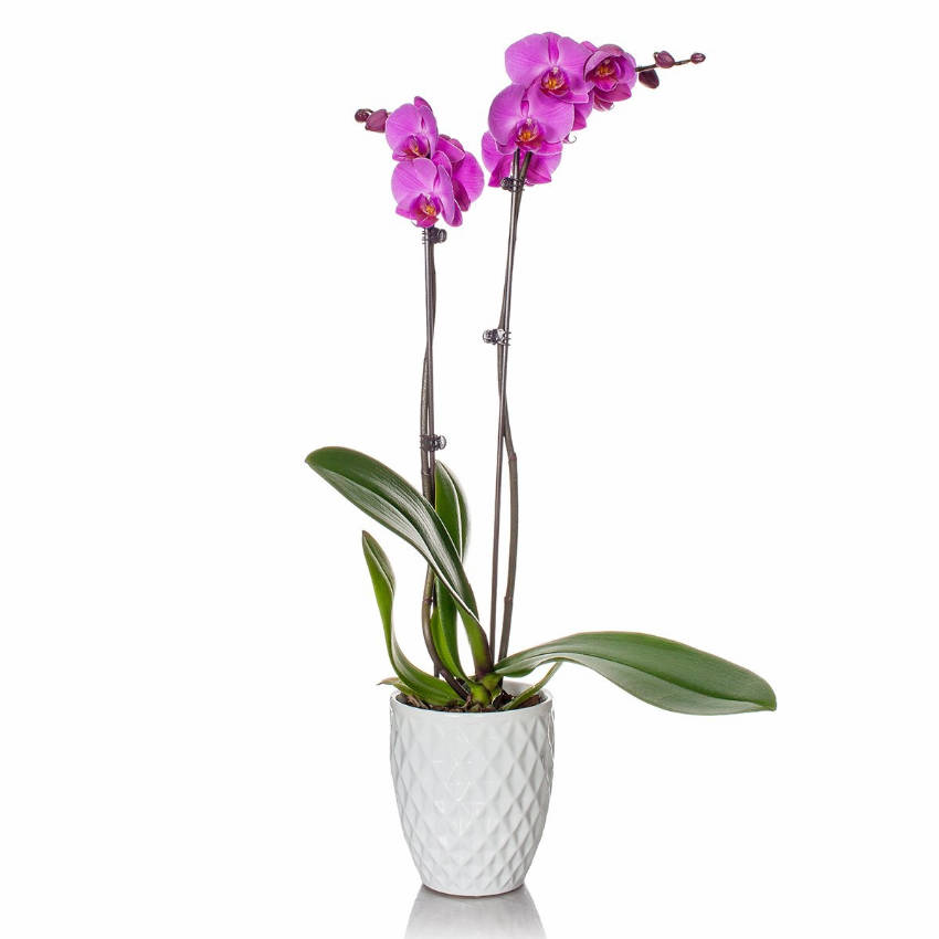 This orchid is super easy to take care of!