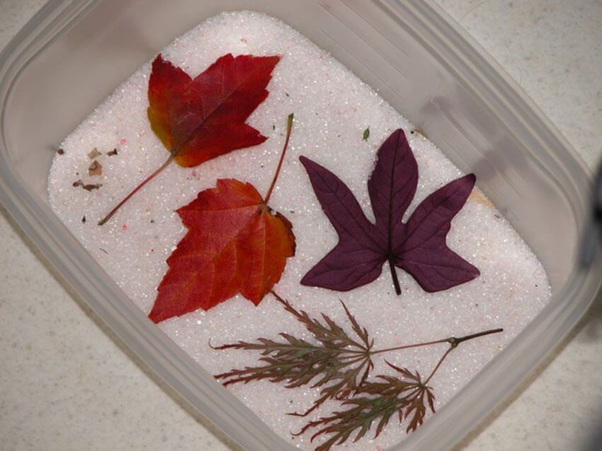 Home DIY projects: By preserving fall leaves, you can create your own seasonal interior accent pieces.