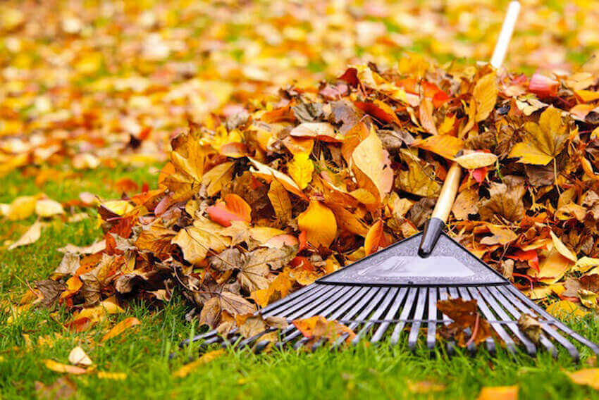 Exterior lawn care: Raking fall leaves is a hassle. Why not do something different? Here are four creative solutions to dealing with fallen leaves.