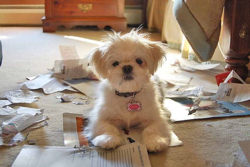 Puppies are so much cuter when they aren't making a mess!