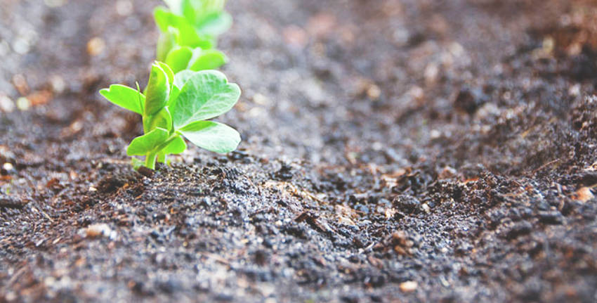 The soil is an essential element of good gardening.