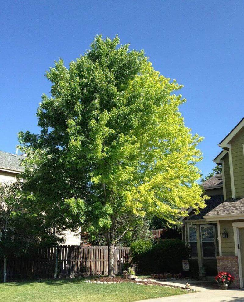 Lawn care for the ages: plant a tree in your backyard
