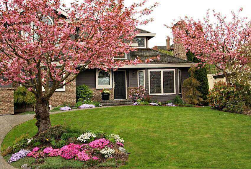 Add curb appeal to your lawn by planting a tree