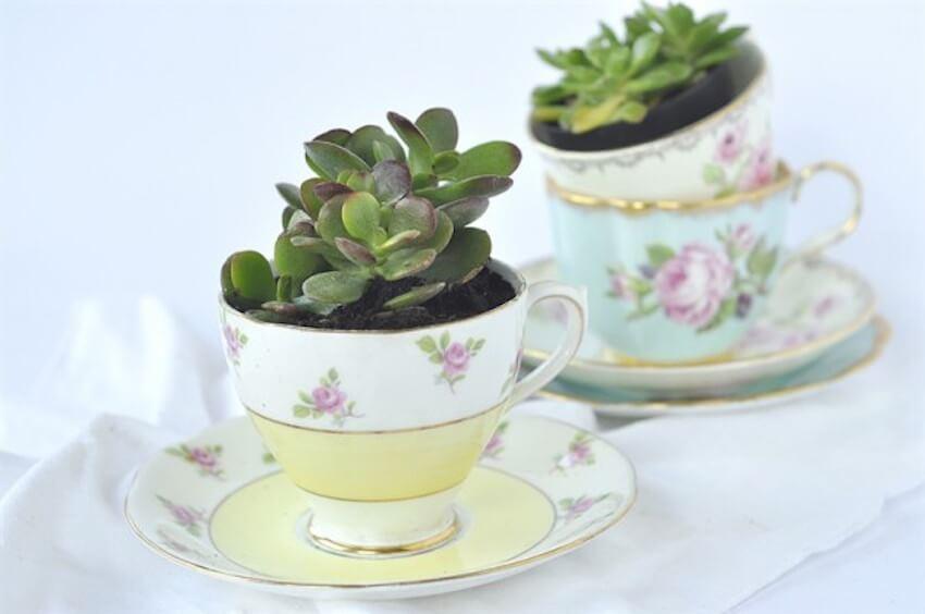 Indoor garden tips: tea cup succulents