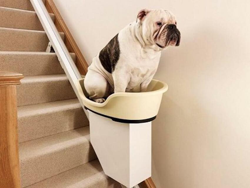 Home remodeling for elderly pets