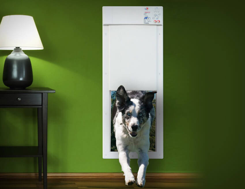 Exterior doors just for your pets! Home remodeling that serves you and your furry friend
