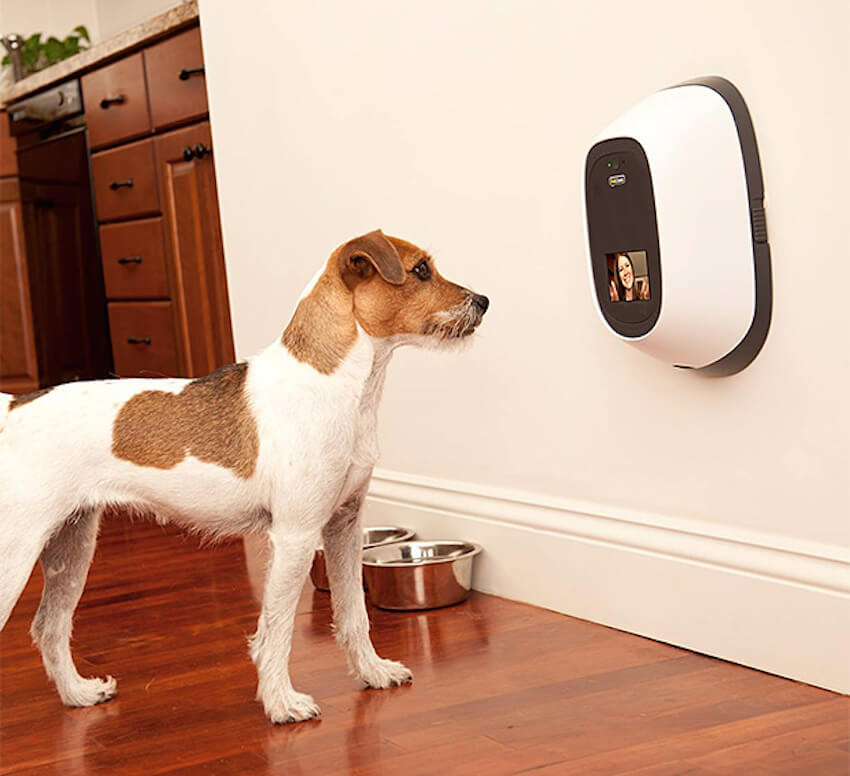 Adding home appliances for your dogs