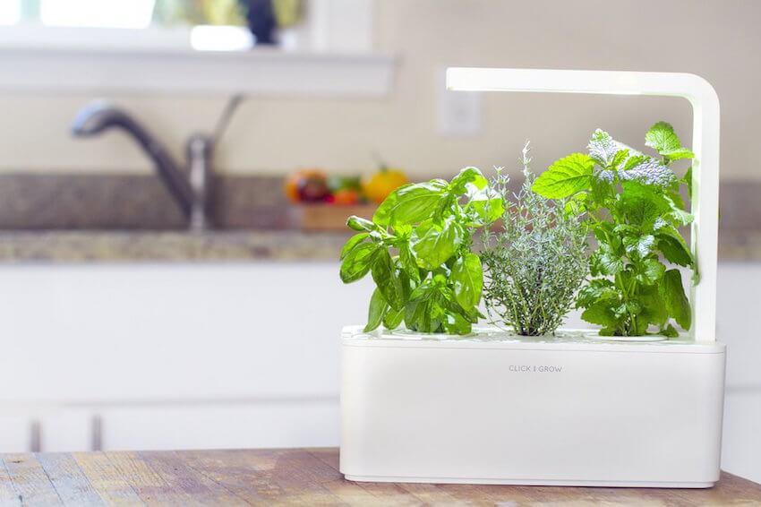Digital gardening indoors: click and grow herb garden