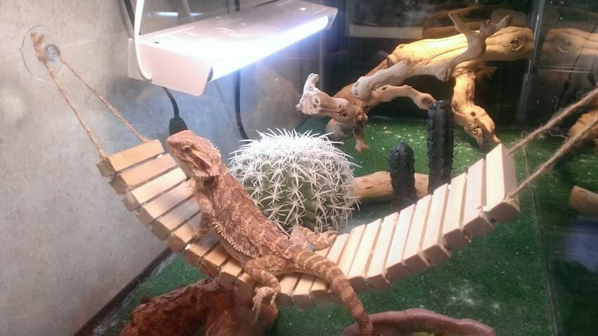 DIY reptile hammock for your cold blooded friend