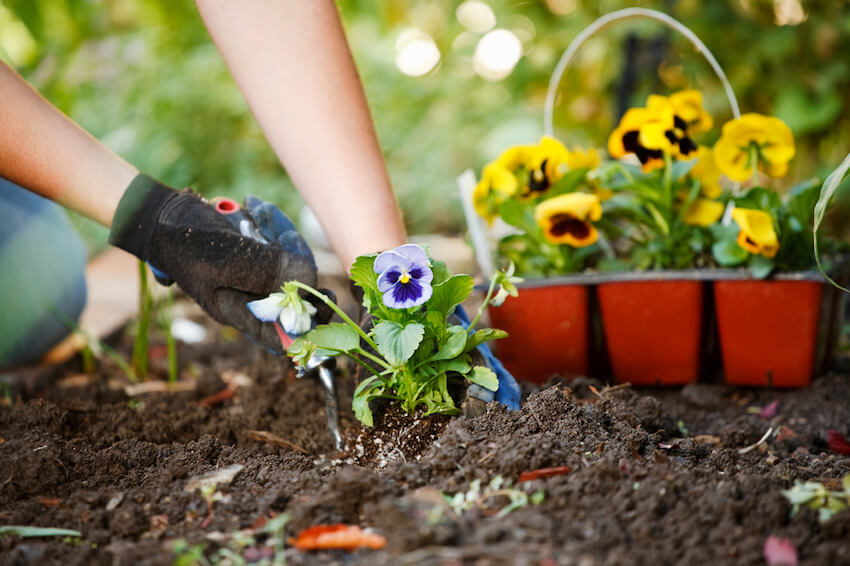 Planting things yourself: the added benefits