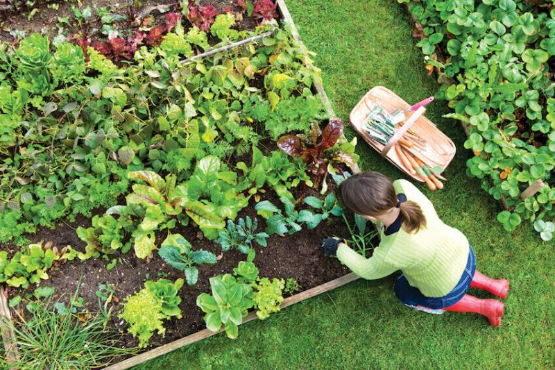 Gardening 101: planting veggies in your backyard