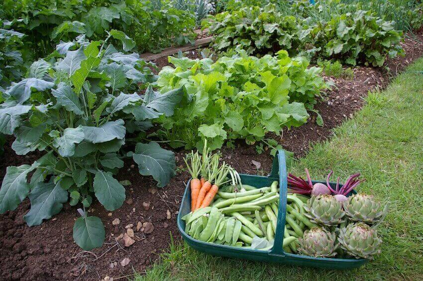 Plants and vegetables in your yard