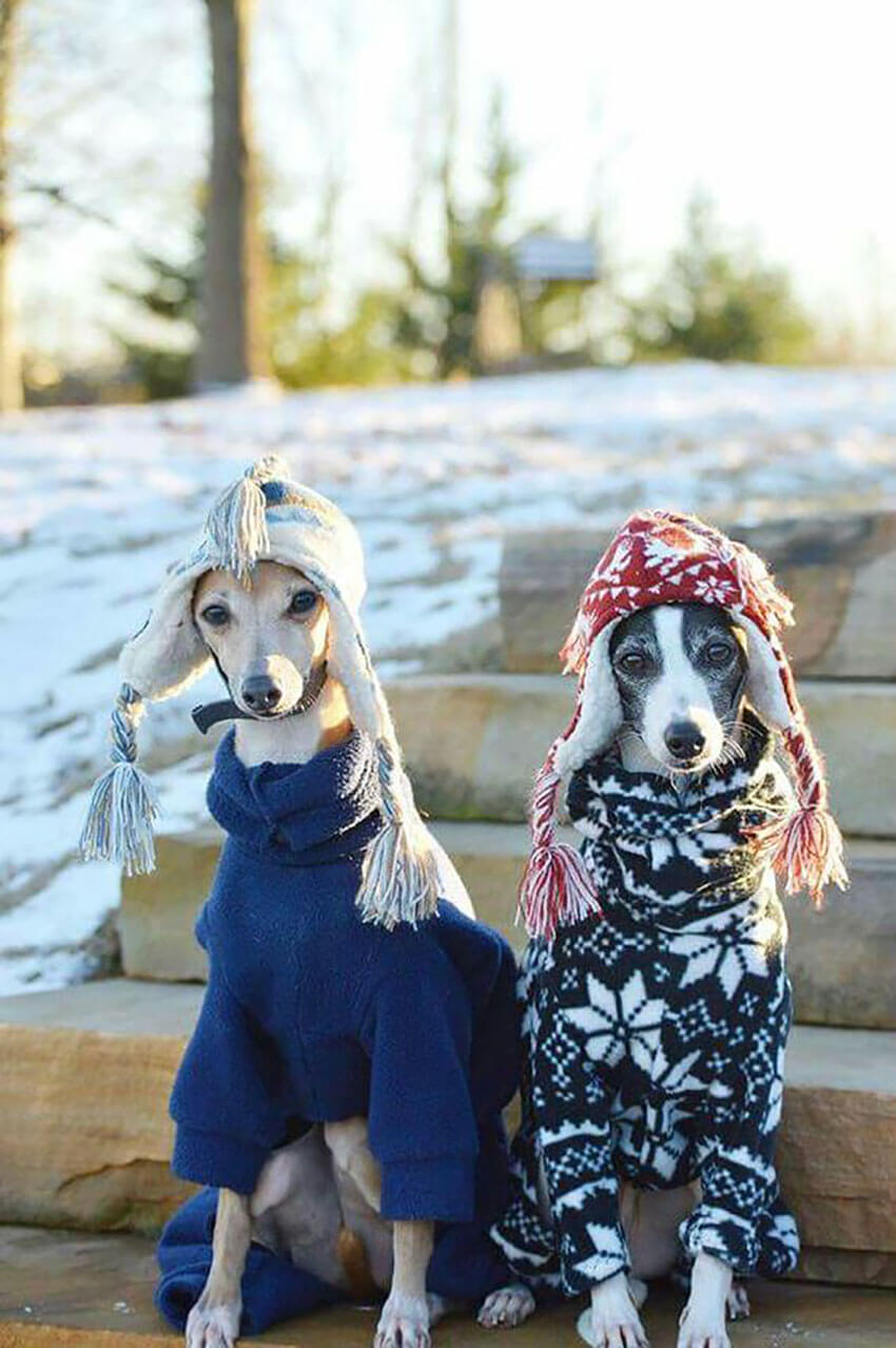 These dogs are ready for the harsh winter.