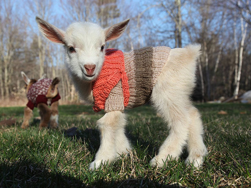 15 Animals That Are So Ready For Sweater Weather
