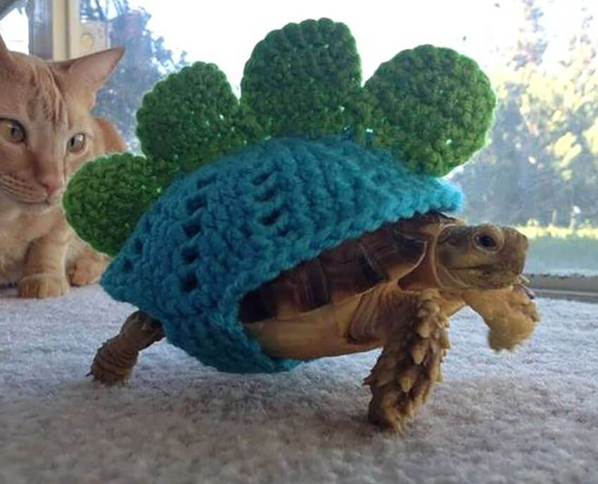 Is there anything more adorable than a turtle in a hand-knitted sweater?