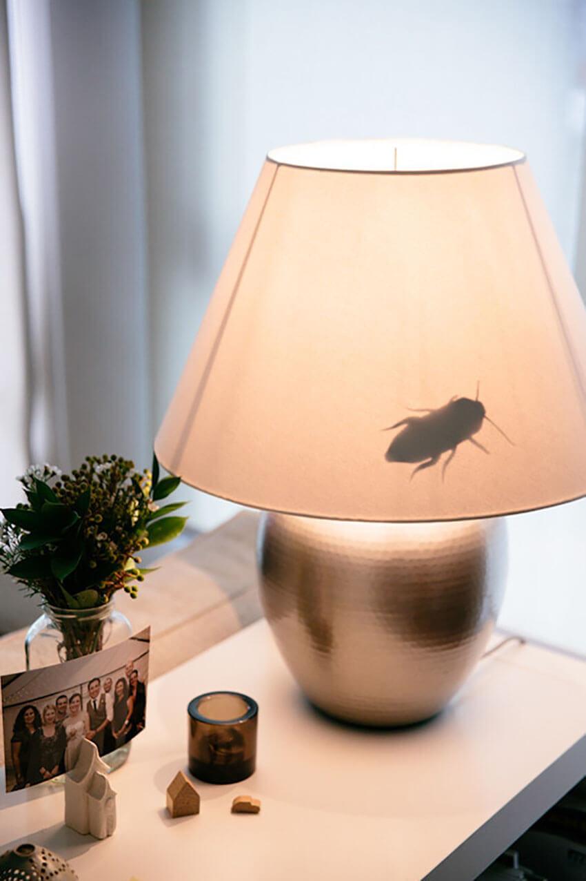 Diy Creepy Insect