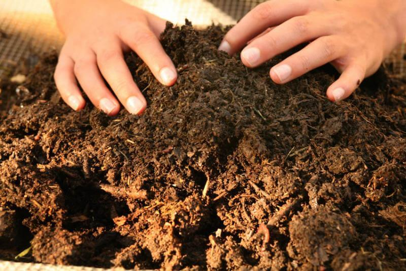 Green thumbs work best in the dirt