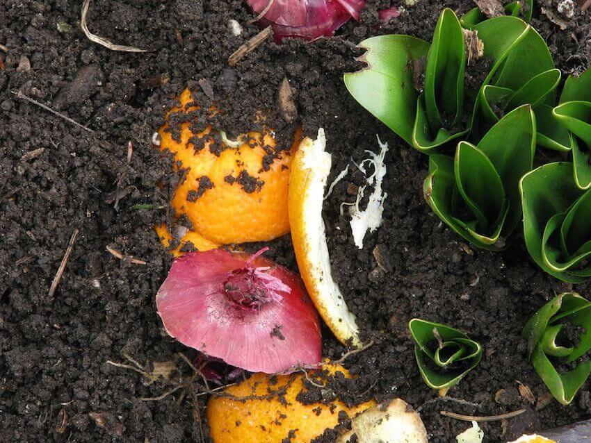 Do your own backyard exterior gardening and planting