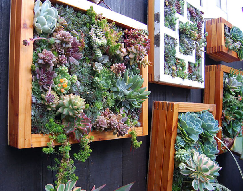 Succulents will instantly impress the guests.
