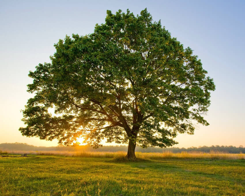 Trees are beautiful and clean the air of our planet. Let's help save them!