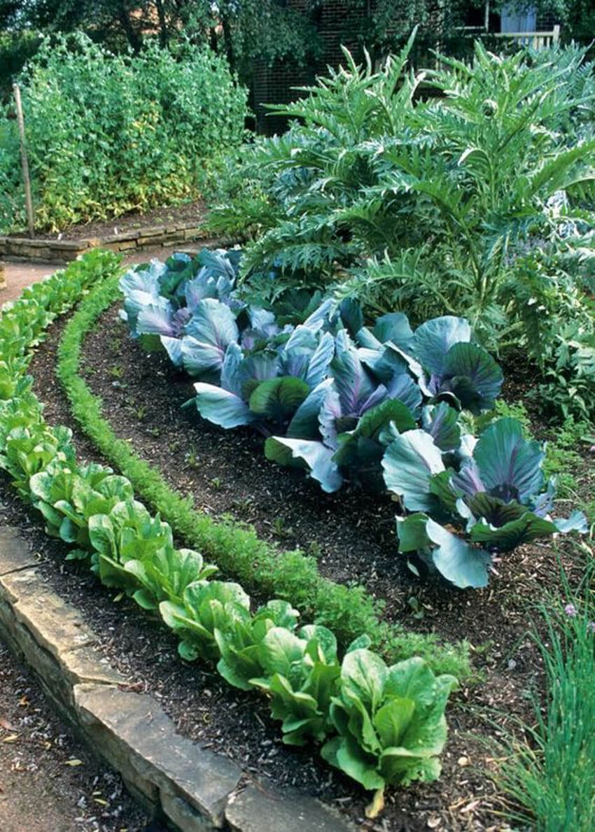 Green veggies are easy to grow and delicious to eat.