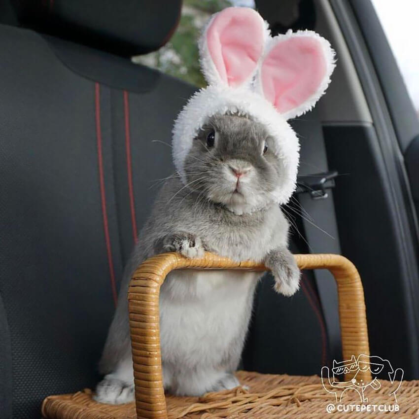 Bunny in Bunny costume