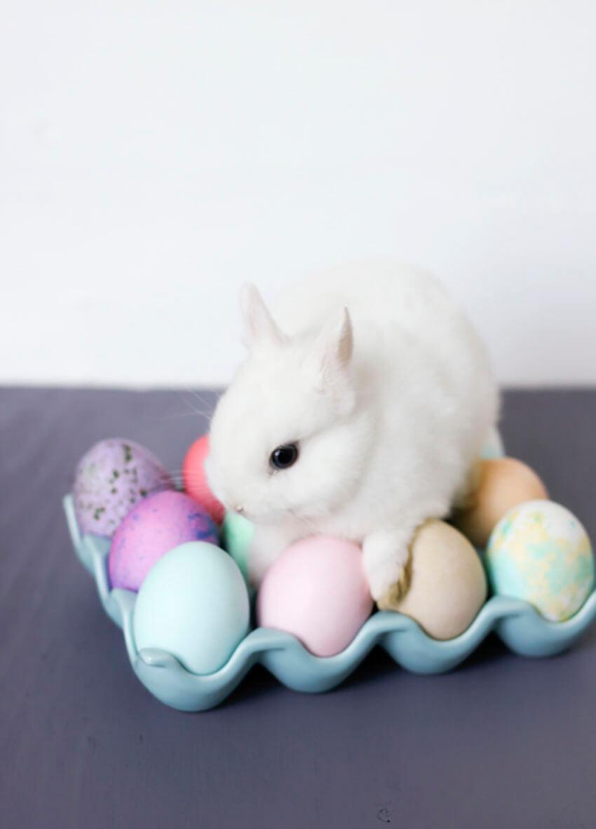 Bunny's Hunt