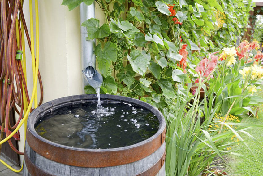 Save water from the rain and reuse it around the house.