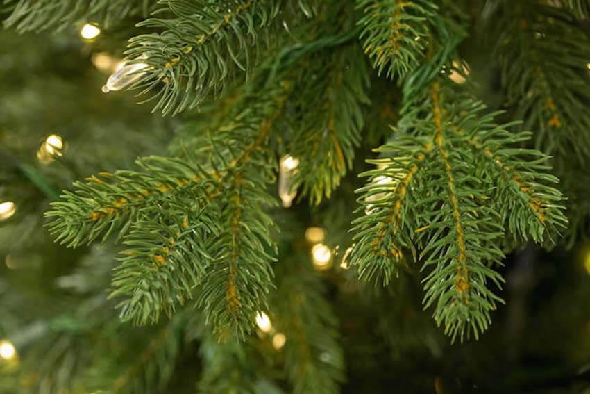 Fresh Christmas trees are happier Christmas trees