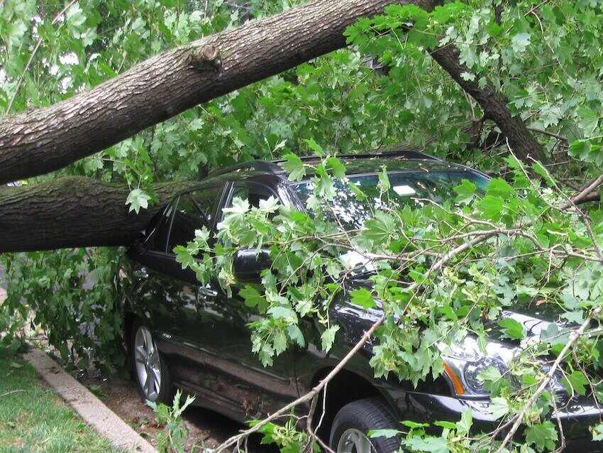 Save your home exterior from falling tree branches