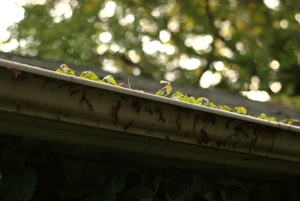 Cleaning out your gutters is essential home maintenance.