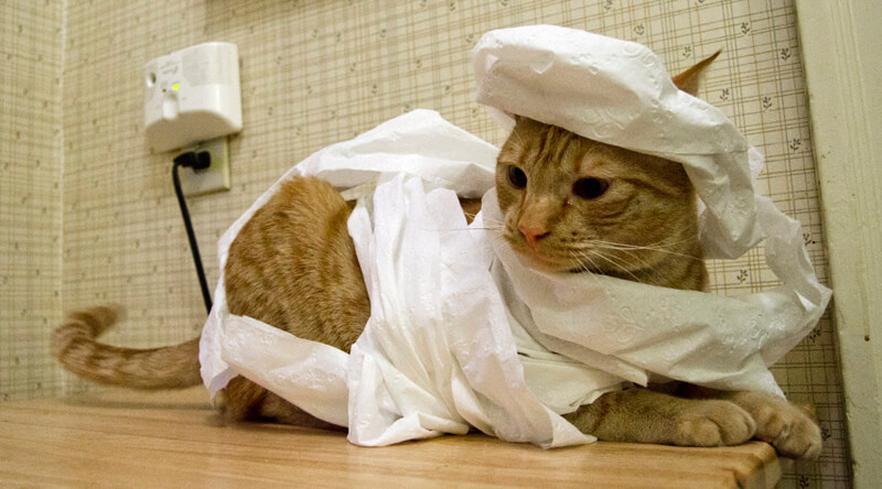 Your pets don't know what Halloween is. Stop trying to turn them into mummies. Otherwise you'll get toilet paper shredded all around your home.