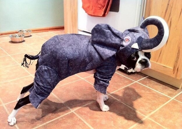 If you plan on dressing up your dog this year, make sure the costume fits comfortably. And that he gets plenty of treats.