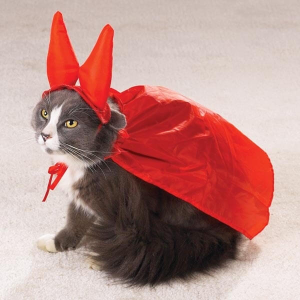 Cats can be a bit naughty, so why not dress yours up like the Devil?