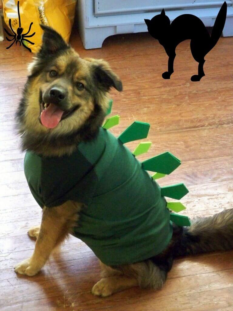 Dress your dog up like an adorable Stegosaurus for Halloween!
