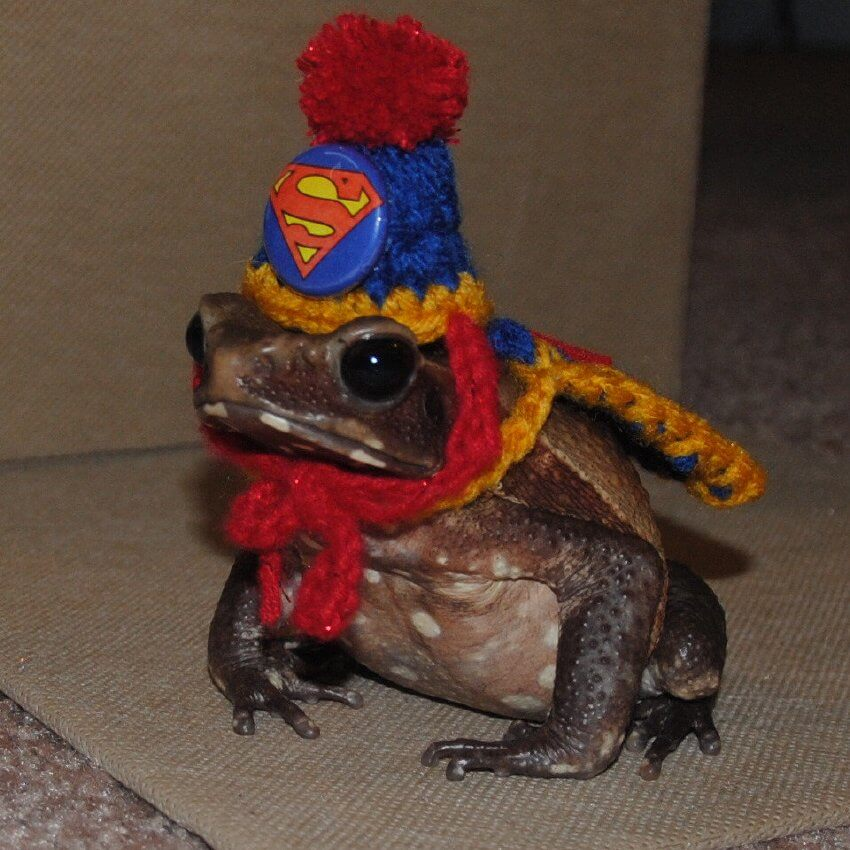 This frog is surely a superhero for deciding to play along.