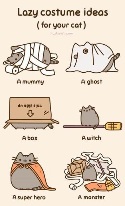 If your cat doesn't enjoy dressing up for Halloween, try some of these