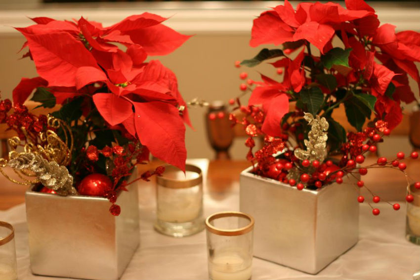 Make Your Holiday Plants Last Until After Christmas