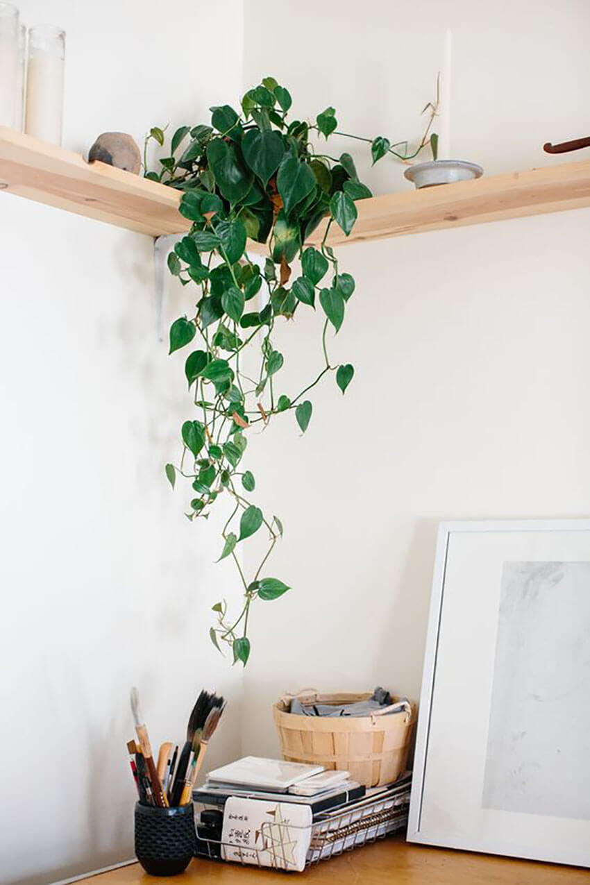 Place one or more houseplants in your work space and watch it increase your concentration.